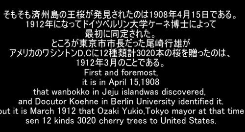 韓国 の 反応 まとめ 桜